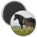 clydesdale mare and filly 2 inch round magnet