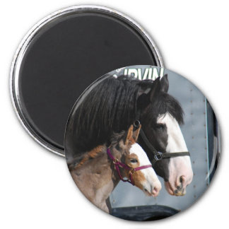 clydesdale mare and filly fridge magnets