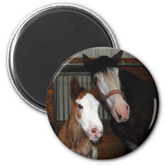 Clydesdale mare and filly refrigerator magnets
