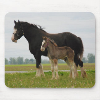 clydesdale mare and filly mouse pad