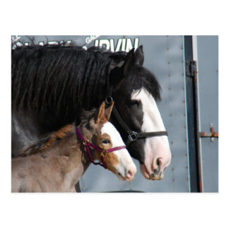 clydesdale mare and filly postcards