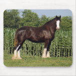 Clydesdale Mouse Pad