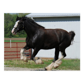 Clydesdale negro postales