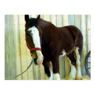 Clydesdale Post Card