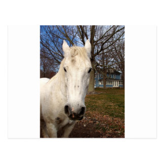 Clydesdale Postcards
