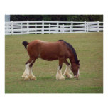 Clydesdale Posters