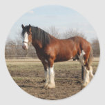 clydesdale round stickers