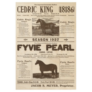 Clydesdale Stallions for Hire Wood Poster