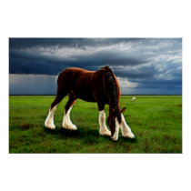 Clydesdale Storm Poster