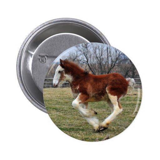 Clydesdale stud colt running 2 inch round button