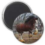 Clydesdale stud colt running 2 inch round magnet