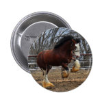 Clydesdale stud colt running button