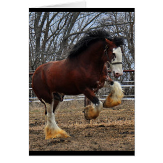 Clydesdale stud colt running card