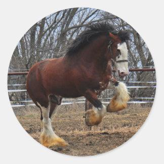 Clydesdale stud colt running classic round sticker