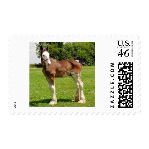 clydesdale stud postage stamps