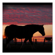 Clydesdale Sunset Print