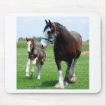 Clydesdale y potra mousepads