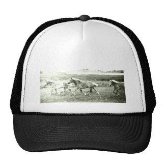 Clydesdales Trucker Hat