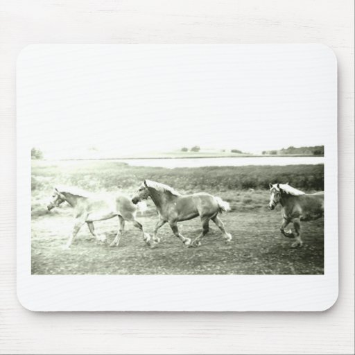 Clydesdales Mouse Pads