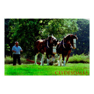 clydesdales posters