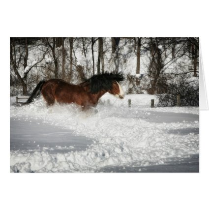 Clydesdale's Snowy Run Greeting Cards