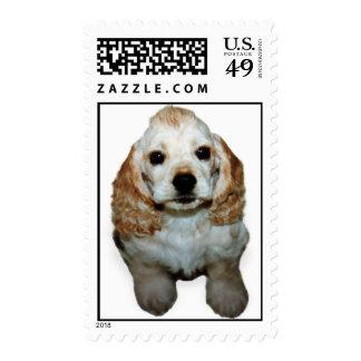 cmt test postage