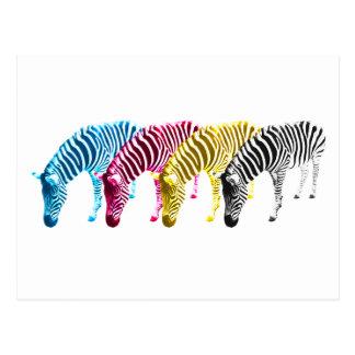 CMYK Drinking zebras Postcard