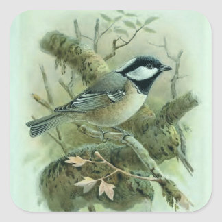 Coal Titmouse Vintage Bird Illustration Square Sticker