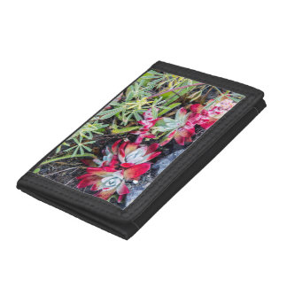 Coast Dudleya At Point Reyes National Seashore Trifold Wallets