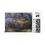 Coast Of Maine 4 Stamp