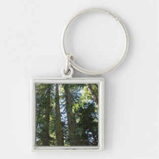 Coast Redwood Trees Keychain