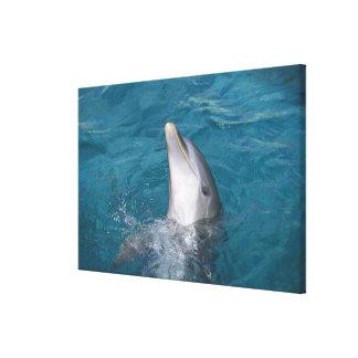 Coastal Bottlenose Dolphin Canvas Print