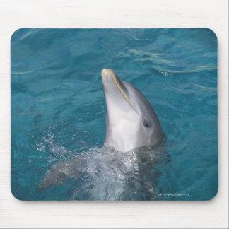 Coastal Bottlenose Dolphin Mouse Pad