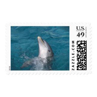 Coastal Bottlenose Dolphin Postage Stamp