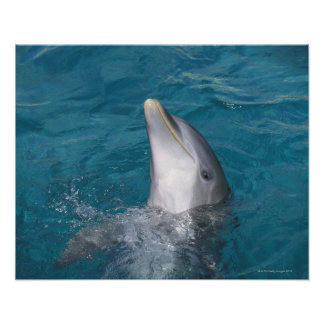 Coastal Bottlenose Dolphin Posters