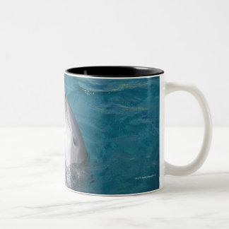 Coastal Bottlenose Dolphin Two-Tone Coffee Mug