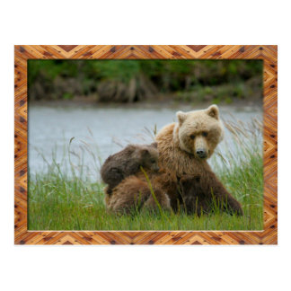 Coastal Brown Bear Sow and Triplets Postcard