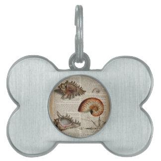 coastal conch vintage seashell botanical print pet name tag