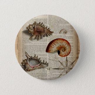 coastal conch vintage seashell botanical print pinback button