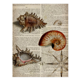 coastal conch vintage seashell botanical print postcard