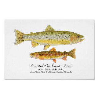 Coastal Cutthroat Trout Art Poster
