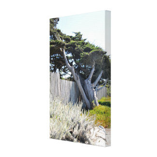 Coastal Cypress Trees Wrapped Canvas