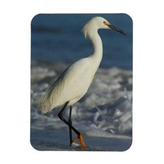 Coastal Egret Magnet