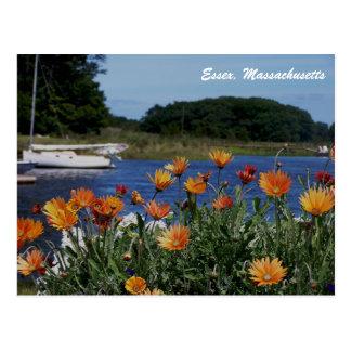 Coastal Essex Massachusetts Postcard with Flowers