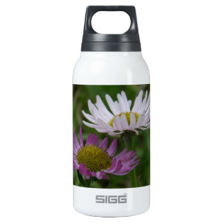 Coastal Fleabane Aster, Erigeron peregrinus SIGG Thermo 0.3L Insulated Bottle