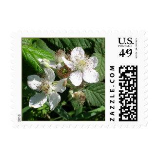 Coastal Flowers Postage Stamp