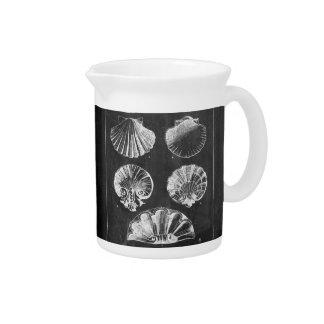 coastal french botanical art chalkboard seashells pitcher