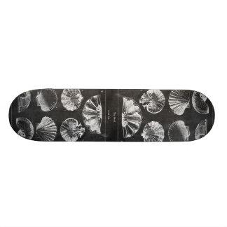 coastal french botanical art chalkboard seashells skateboard