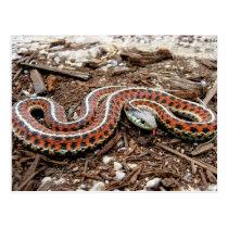Coastal Garter Snake Postcard