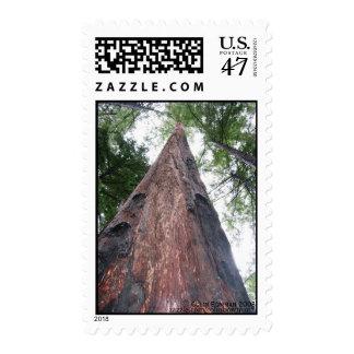 Coastal Redwood - Big Sur, California stamp